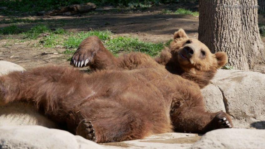 Brněnská zoo chystá lanovku i výlet do pravěku
