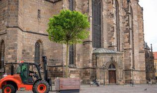 Centrum Plzně zdobí až dvě tuny vážící dřevěné květináče z tropického dřeva jatoba