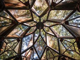 zdroj Profimedia.cz Popisek: Pohled vzhůru do korun stromů připomíná díky geometrickým obrazcům kostry pohled do kaleidoskopu
