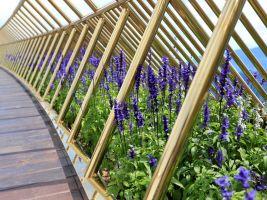 zdroj archdaily.com Popisek: Balustrády mostu lemují květiny