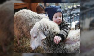 Nedaleko Plzně vyroste alternativní školka se zvířaty a vlastním pečeným chlebem