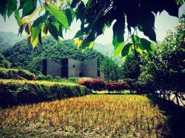 Ningbo Duao Art Museum (1)