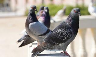 Vrch Vítkova ozdobí umělecky ztvárněný holubník